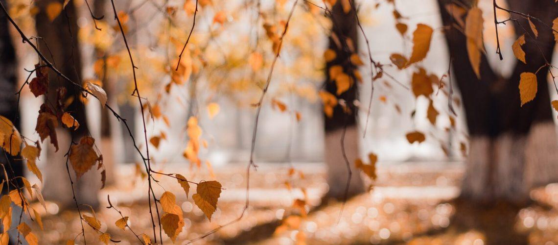 otoño en malaga